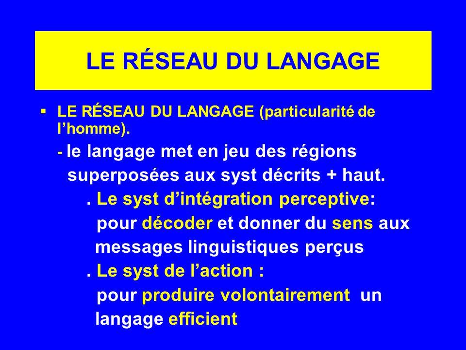 LE RÉSEAU DU LANGAGE LE RÉSEAU DU LANGAGE (particularité de lhomme). - le langage met en jeu des régions superposées aux syst décrits + haut.. Le syst