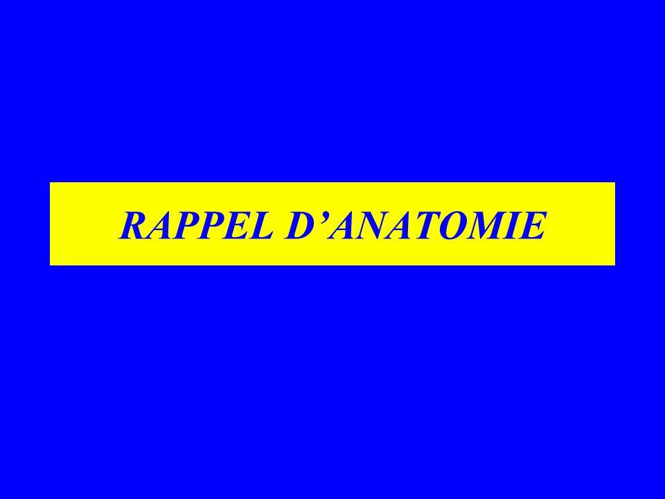 RAPPEL DANATOMIE