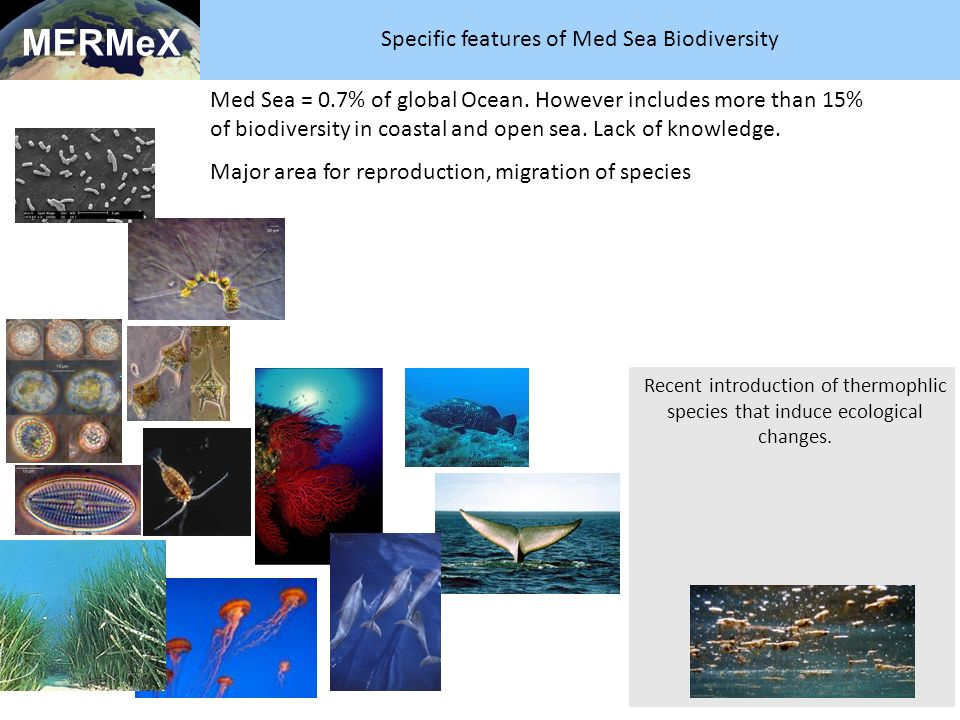 Med Sea = 0.7% of global Ocean. However includes more than 15% of biodiversity in coastal and open sea. Lack of knowledge. Major area for reproduction
