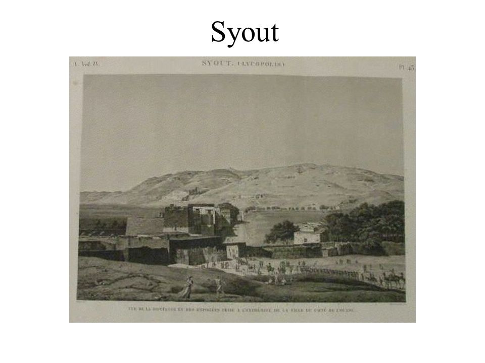 Syout