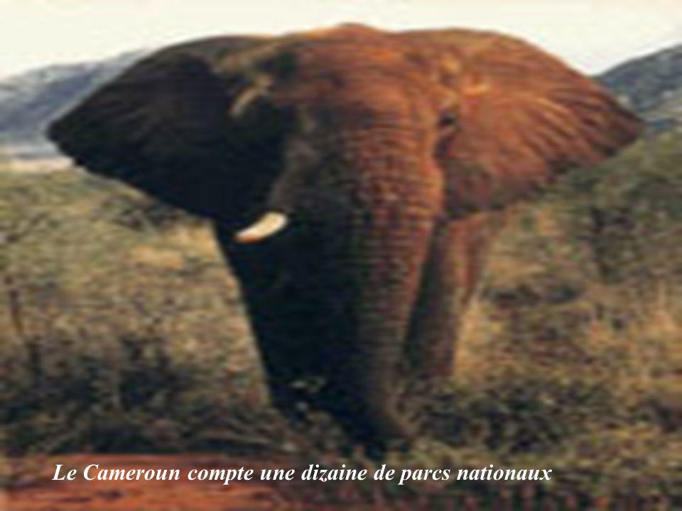 Le Cameroun compte une dizaine de parcs nationaux