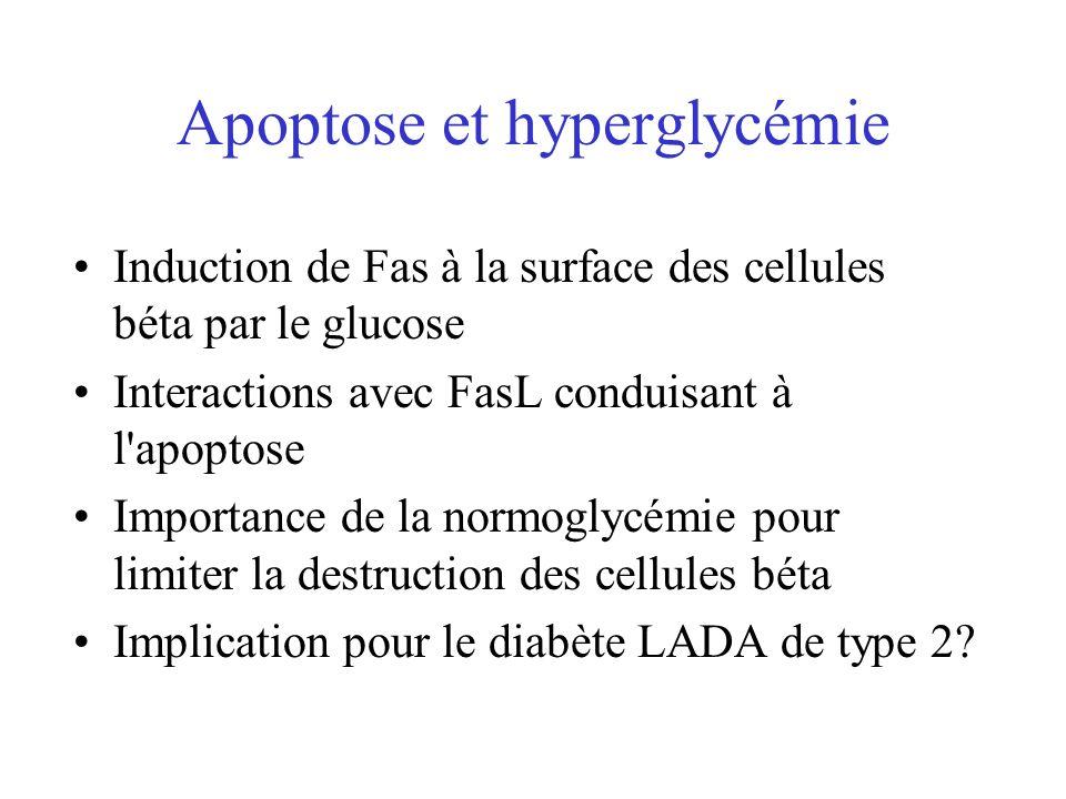 Apoptose et hyperglycémie Induction de Fas à la surface des cellules béta par le glucose Interactions avec FasL conduisant à l'apoptose Importance de