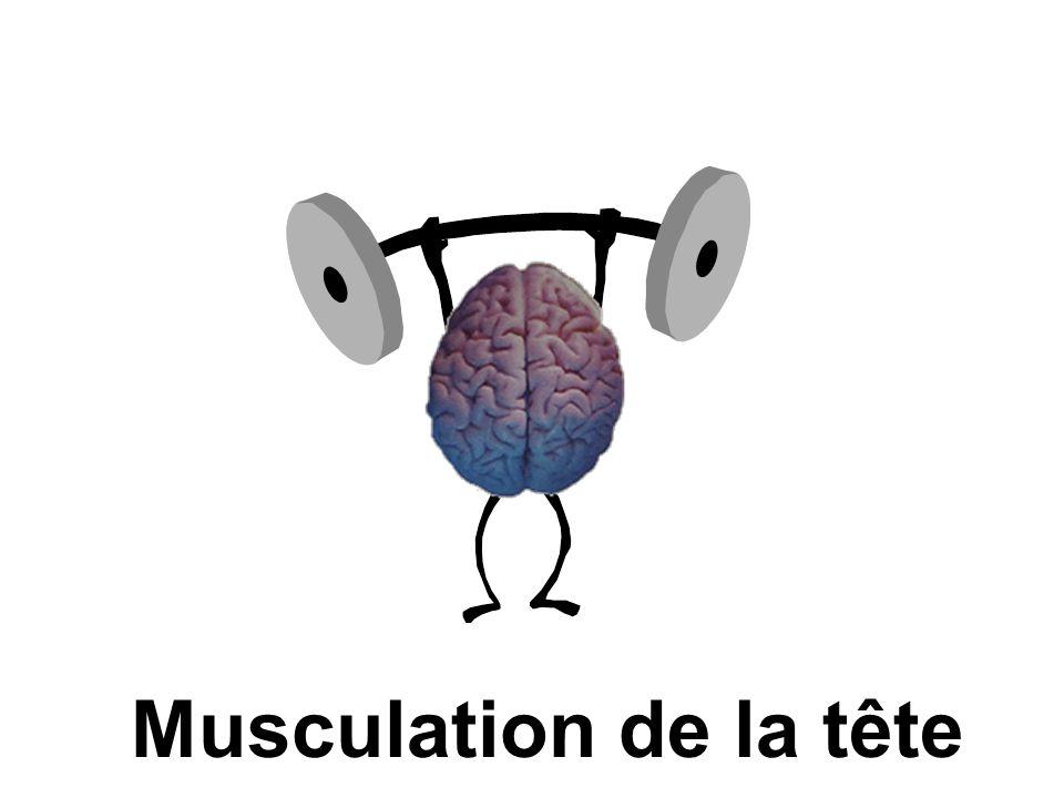 Musculation de la tête