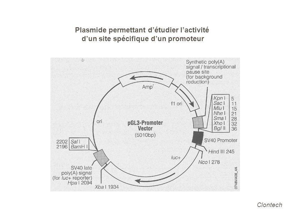 Plasmide permettant détudier lactivité dun site spécifique dun promoteur Clontech