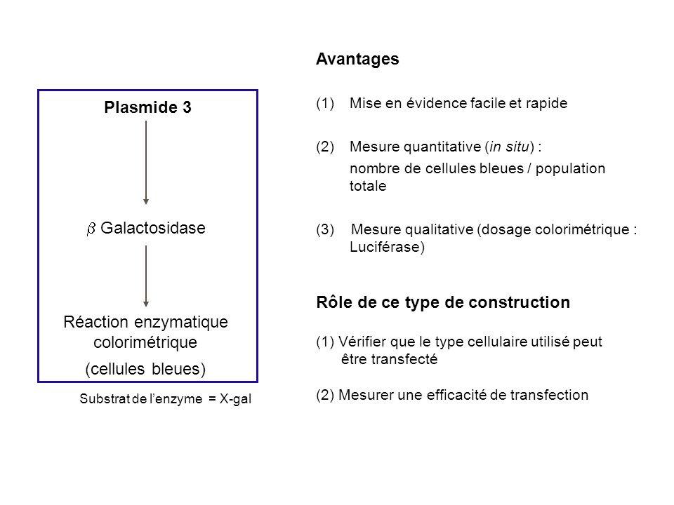 Plasmide 3 Galactosidase Réaction enzymatique colorimétrique (cellules bleues) Avantages (1)Mise en évidence facile et rapide (2)Mesure quantitative (