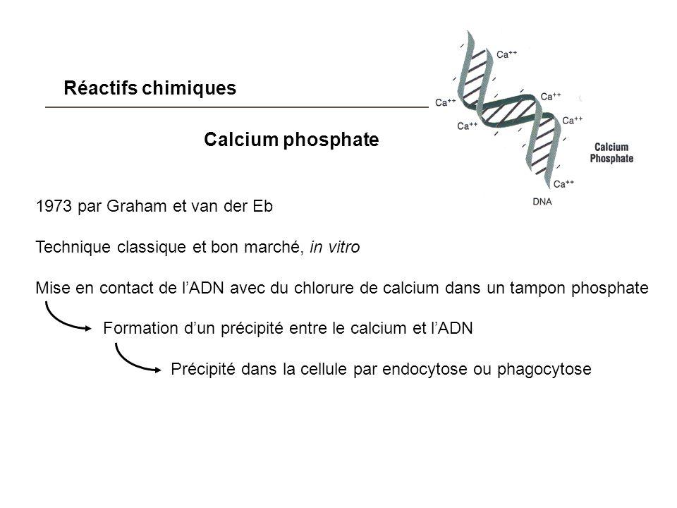 Réactifs chimiques Calcium phosphate 1973 par Graham et van der Eb Technique classique et bon marché, in vitro Mise en contact de lADN avec du chlorur