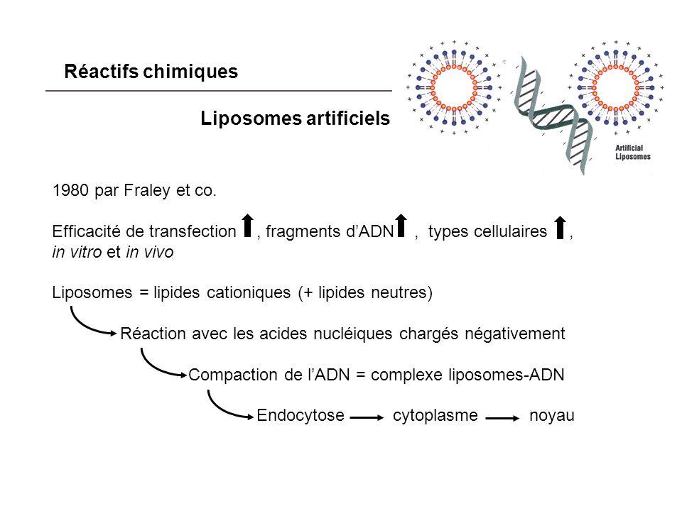 Applications (in vitro) 1.Surexpression de protéines absentes dans un type cellulaire donné : 2.