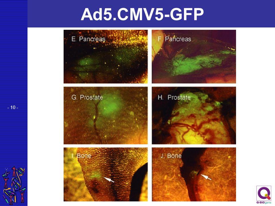 - 10 - Ad5.CMV5-GFP