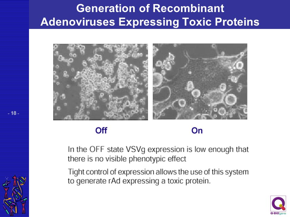 - 18 - Generation of Recombinant Adenoviruses Expressing Toxic Proteins