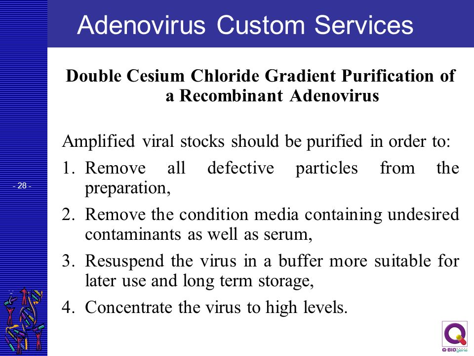 - 28 - Adenovirus Custom Services Double Cesium Chloride Gradient Purification of a Recombinant Adenovirus Amplified viral stocks should be purified i
