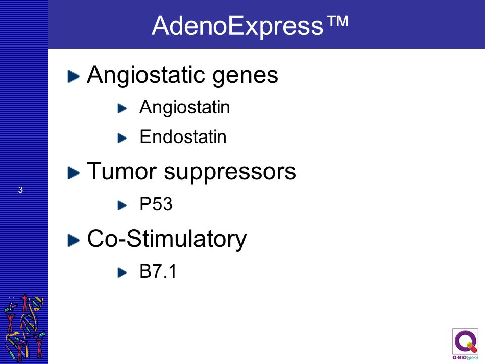 - 3 - AdenoExpress Angiostatic genes Angiostatin Endostatin Tumor suppressors P53 Co-Stimulatory B7.1