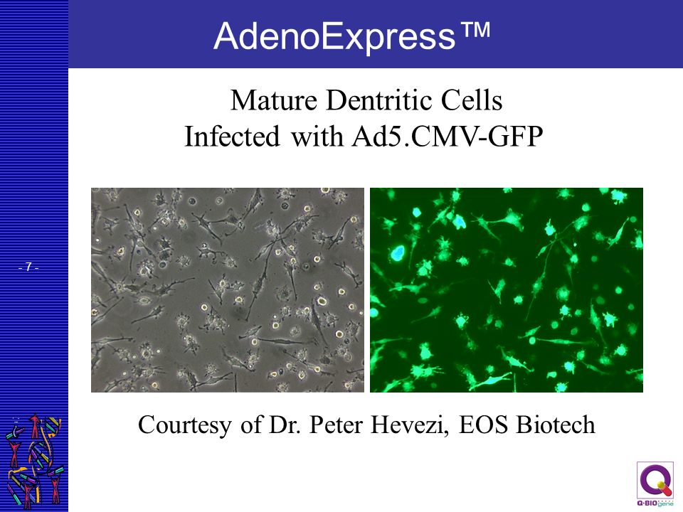 - 18 - Generation of Recombinant Adenoviruses Expressing Toxic Proteins