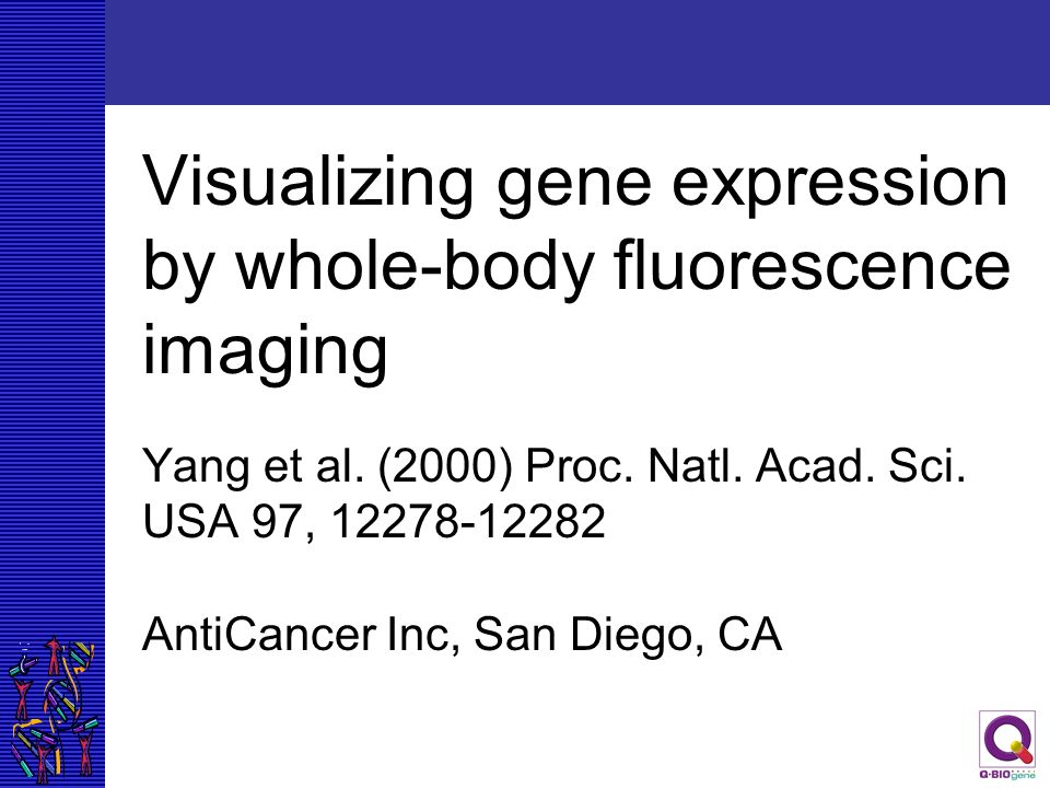Visualizing gene expression by whole-body fluorescence imaging Yang et al. (2000) Proc. Natl. Acad. Sci. USA 97, 12278-12282 AntiCancer Inc, San Diego