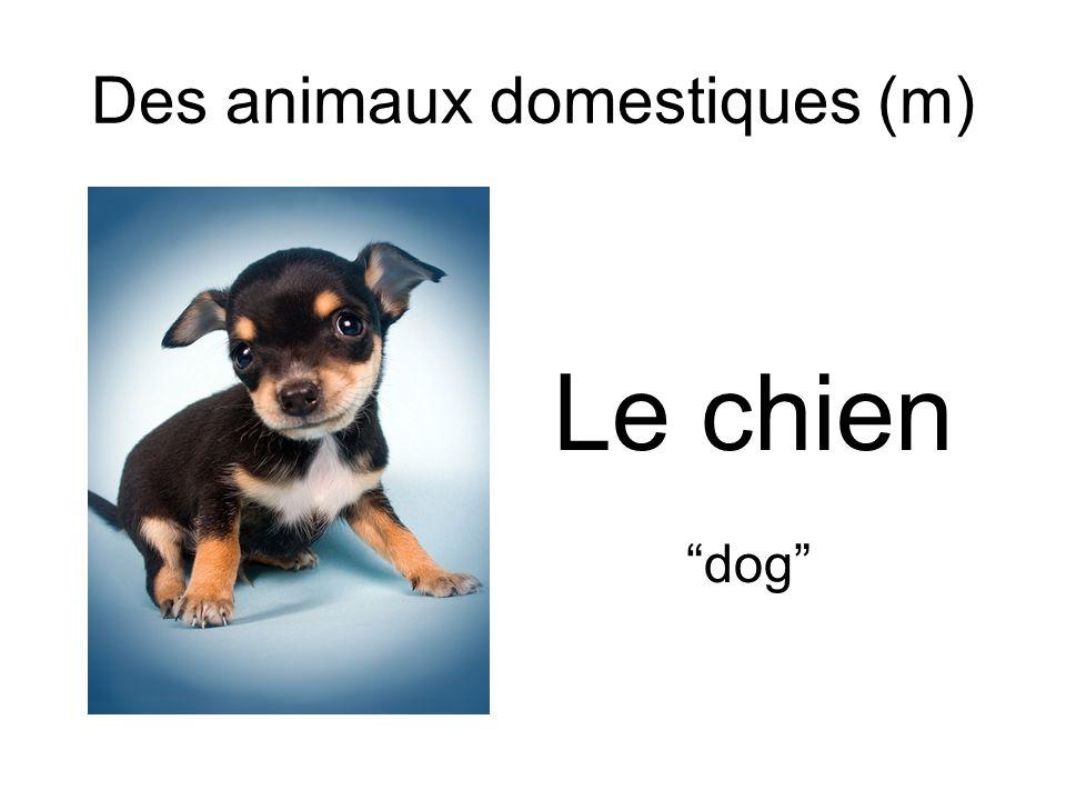 Des animaux domestiques (m) Le chien dog