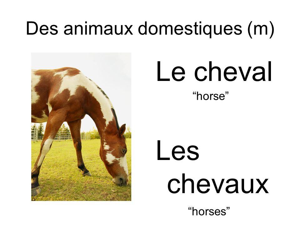 Des animaux domestiques (m) Le cheval Les chevaux horse horses