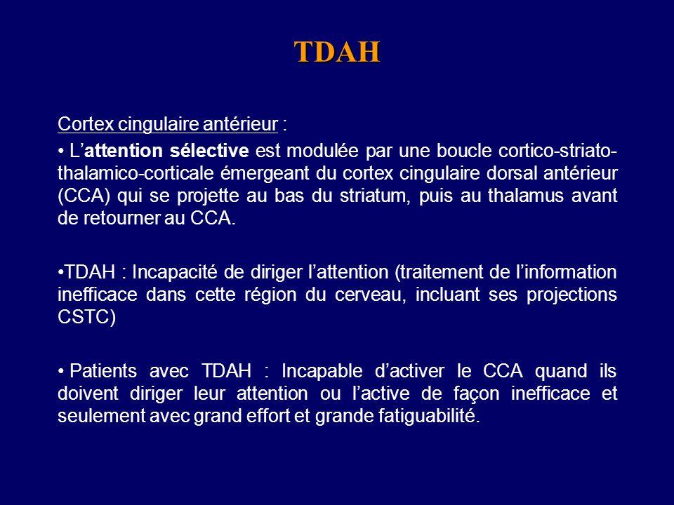 Bilateral Insula Adultes TDAH: Baseline Scan, sans medication Cingulaire Antérieur