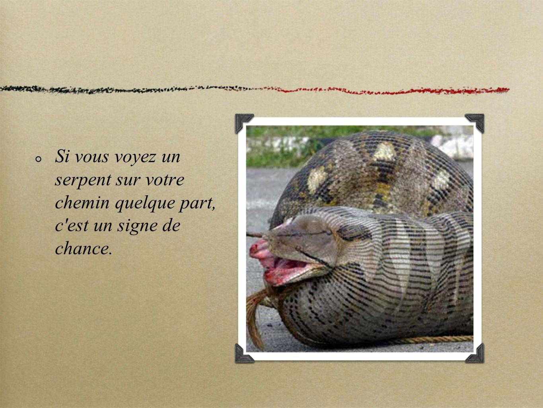 Si vous voyez un serpent sur votre chemin quelque part, c'est un signe de chance.