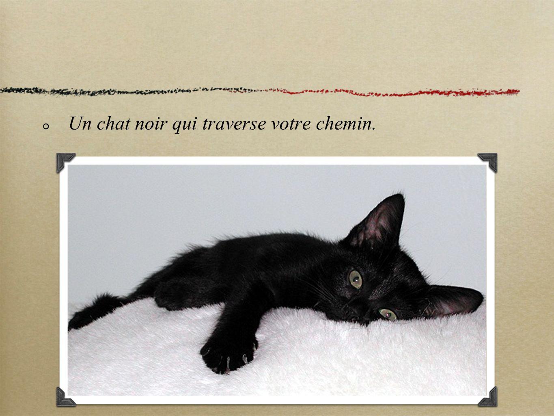 Un chat noir qui traverse votre chemin.