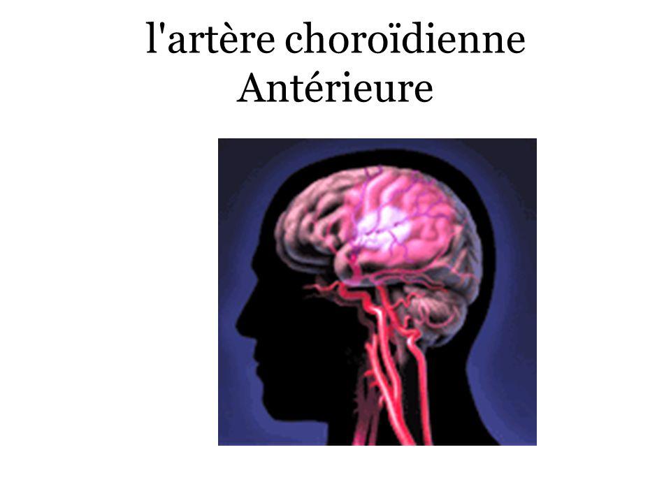 l'artère choroïdienne Antérieure