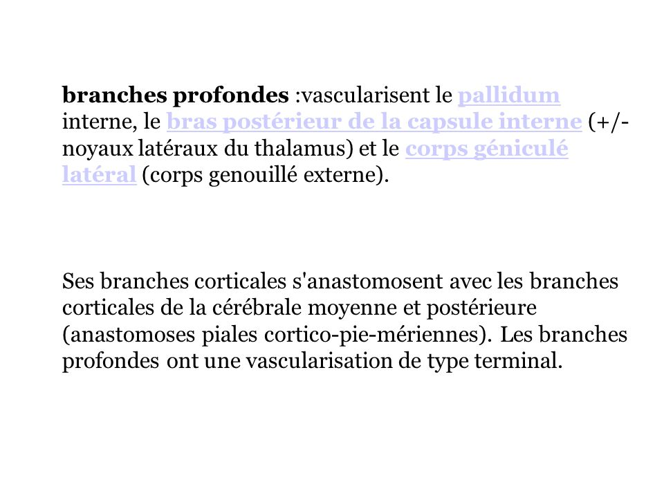 branches profondes :vascularisent le pallidum interne, le bras postérieur de la capsule interne (+/- noyaux latéraux du thalamus) et le corps géniculé