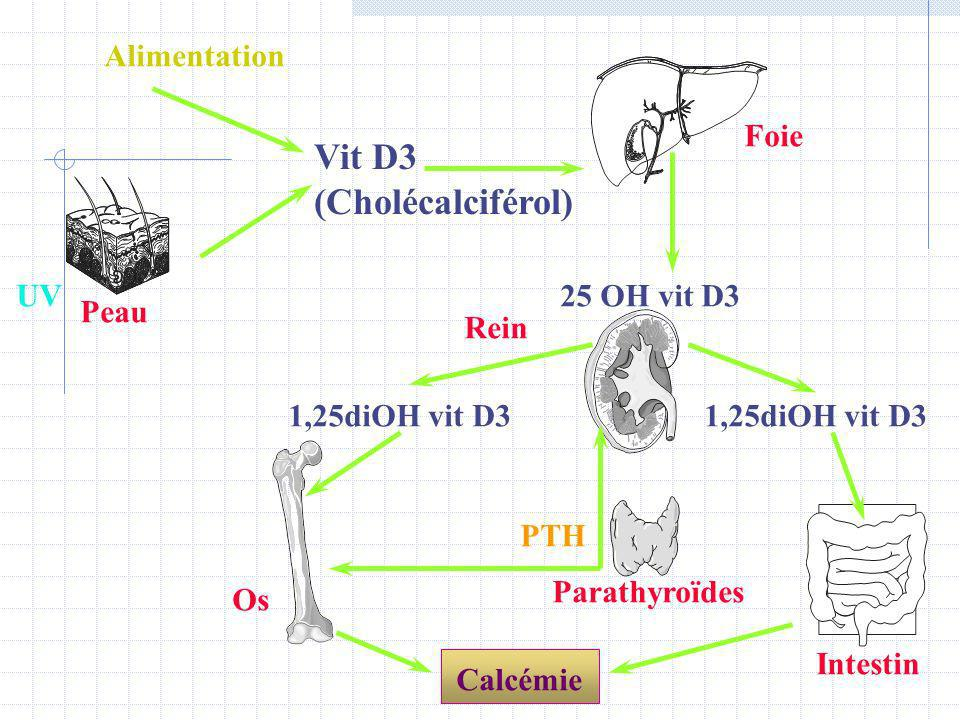 UV Vit D3 (Cholécalciférol) Foie Rein 25 OH vit D3 1,25diOH vit D3 Os Intestin Parathyroïdes Peau Alimentation 1,25diOH vit D3 PTH Calcémie