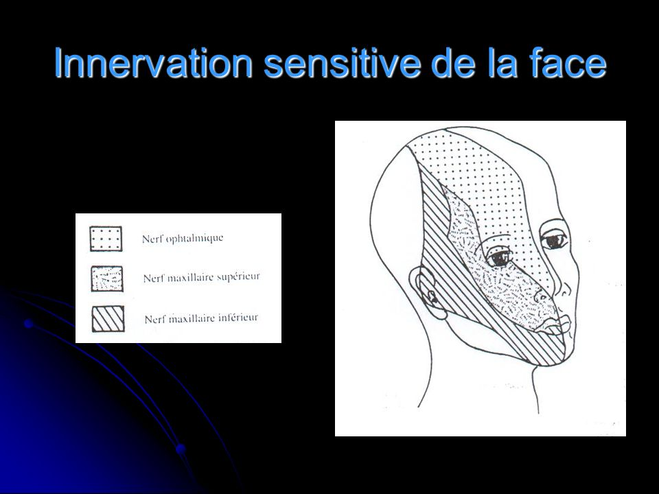 Innervation sensitive de la face