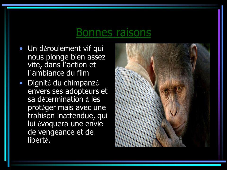 Bonnes raisons Un d é roulement vif qui nous plonge bien assez vite, dans l action et l ambiance du film Dignit é du chimpanz é envers ses adopteurs e