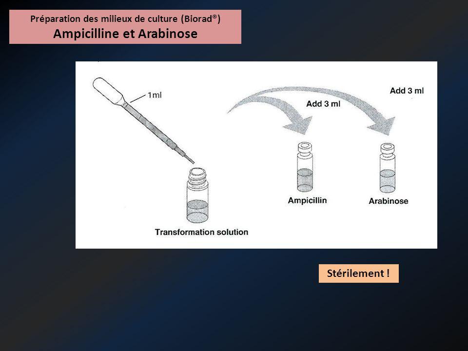 Préparation des milieux de culture (Biorad®) Ampicilline et Arabinose Volume dans les boites : 12 mL