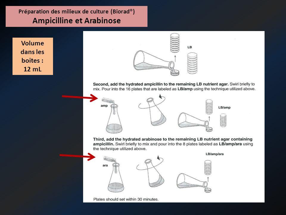 Préparation des milieux de culture (Paul Eluard®) - À partir des milieux Columbia, couler 16 milieux LB - Puis préparer les milieux LB/Amp et LB/Ara + Amp, de façon similaire à la méthode Biorad®