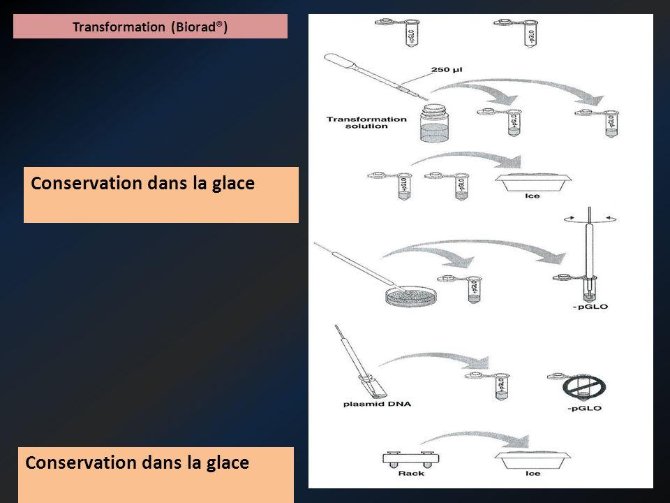 Transformation (Biorad®) Choc thermique : 42°C, 50 secondes, puis dans la glace Conservation dans la glace