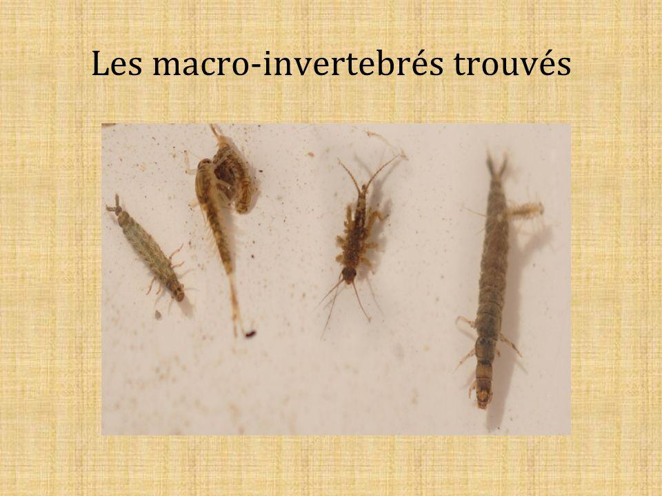 Les macro-invertebrés trouvés