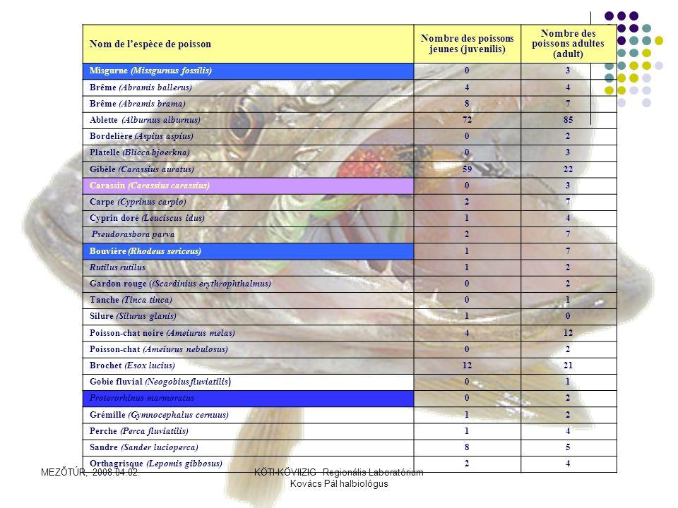 MEZŐTÚR, 2008.04.02.KÖTI-KÖVIIZIG Regionális Laboratórium Kovács Pál halbiológus SYNTHESE 25 espèces ont été découvertes, dont 3 parmi les espèces protégées, 1 exposée au danger de disparition, cela dépasse les 10%.