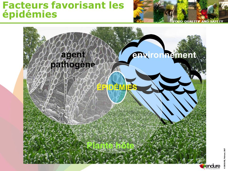 © ENDURE, February 2007 FOOD QUALITY AND SAFETY © ENDURE, February 2007 FOOD QUALITY AND SAFETY agent pathogène environnement ÉPIDÉMIES Facteurs favorisant les épidémies Plante hôte