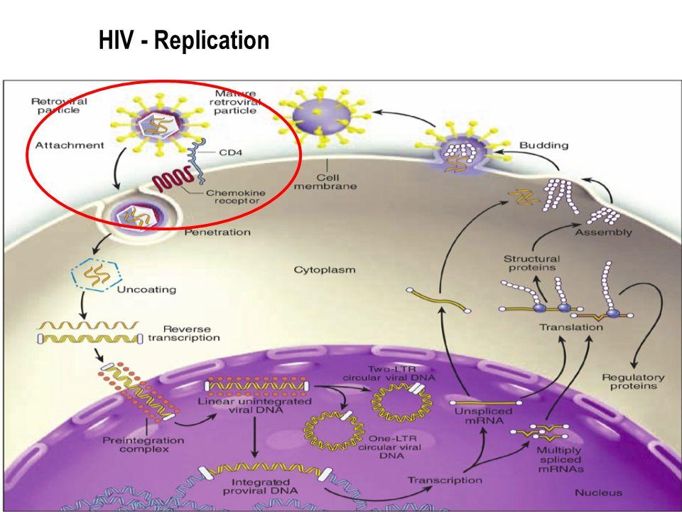 16 HIV - Replication
