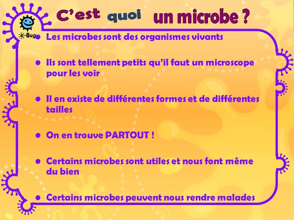 Il y a trois différents types de bactéries.