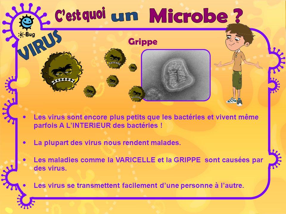 PenicilliumDermatophyte Les champignons sont les plus grands de tous les microbes.