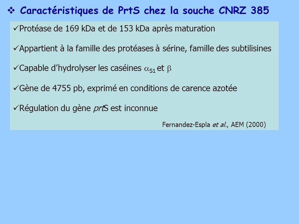 Caractéristiques de PrtS chez la souche CNRZ 385 Protéase de 169 kDa et de 153 kDa après maturation Appartient à la famille des protéases à sérine, fa