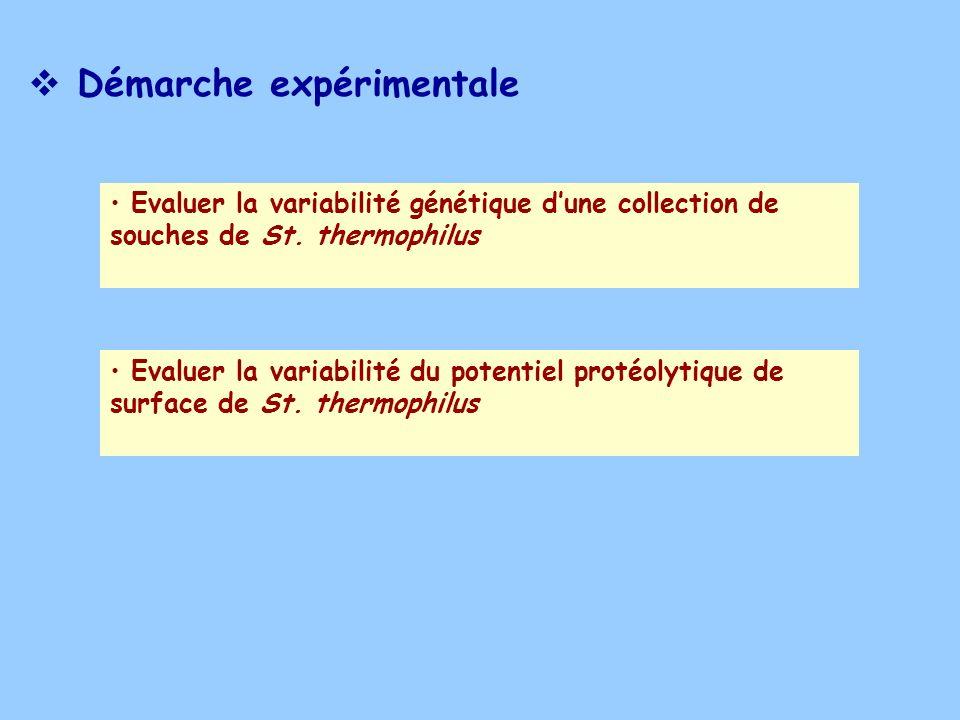 Démarche expérimentale Evaluer la variabilité génétique dune collection de souches de St. thermophilus Evaluer la variabilité du potentiel protéolytiq