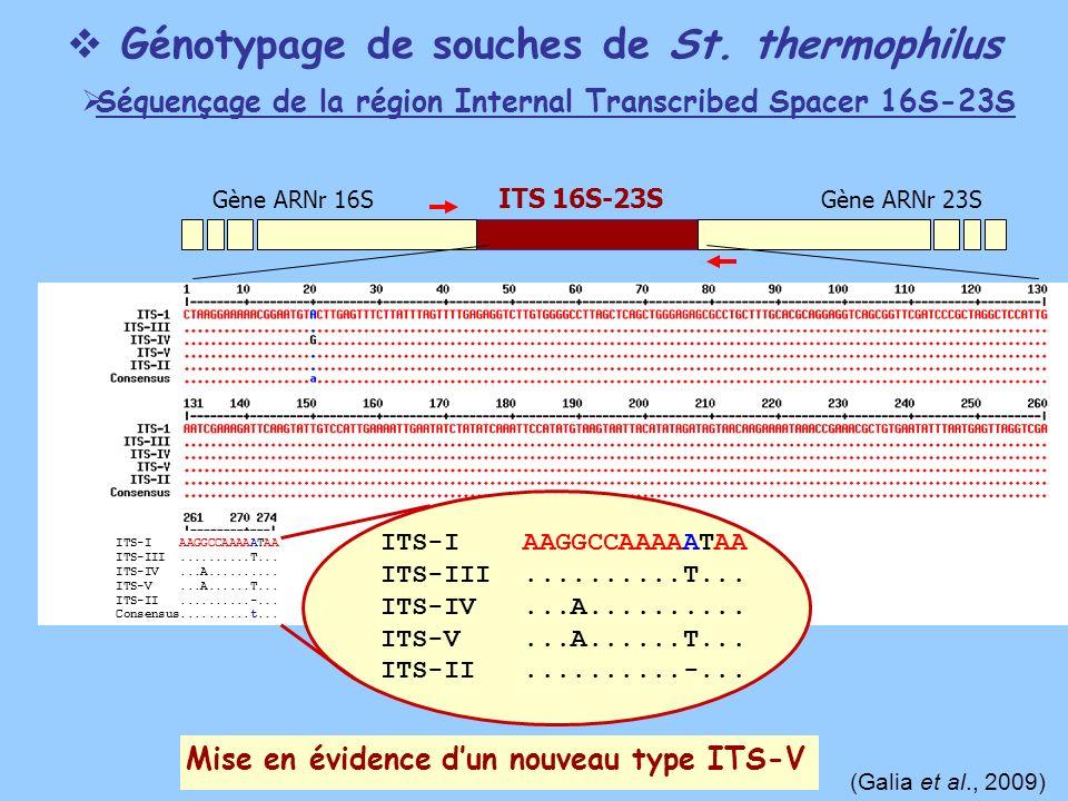 Gène ARNr 16SGène ARNr 23S ITS 16S-23S ITS-I AAGGCCAAAAATAA ITS-III..........T... ITS-IV...A.......... ITS-V...A......T... ITS-II..........-... Consen