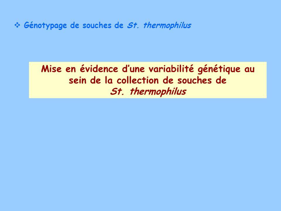 Génotypage de souches de St. thermophilus Mise en évidence dune variabilité génétique au sein de la collection de souches de St. thermophilus