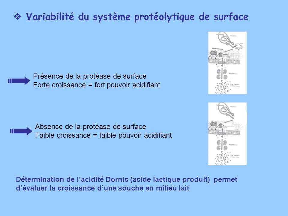 Variabilité du système protéolytique de surface Détermination de lacidité Dornic (acide lactique produit) permet dévaluer la croissance dune souche en