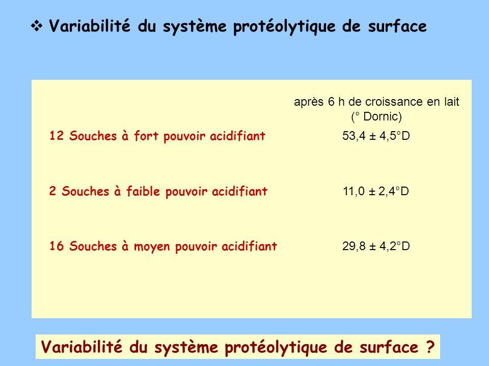 Variabilité du système protéolytique de surface ? Variabilité du système protéolytique de surface 12 Souches à fort pouvoir acidifiant 53,4 ± 4,5°D 2