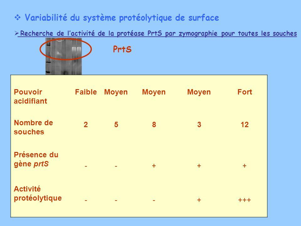 Variabilité du système protéolytique de surface Recherche de lactivité de la protéase PrtS par zymographie pour toutes les souches PrtS Pouvoir acidif