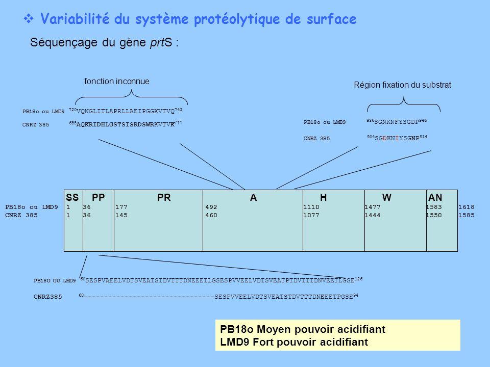 Variabilité du système protéolytique de surface Séquençage du gène prtS : SS PP PRA H W AN PB18o ou LMD9 1 36 177 492 1110 1477 1583 1618 CNRZ 385 1 3