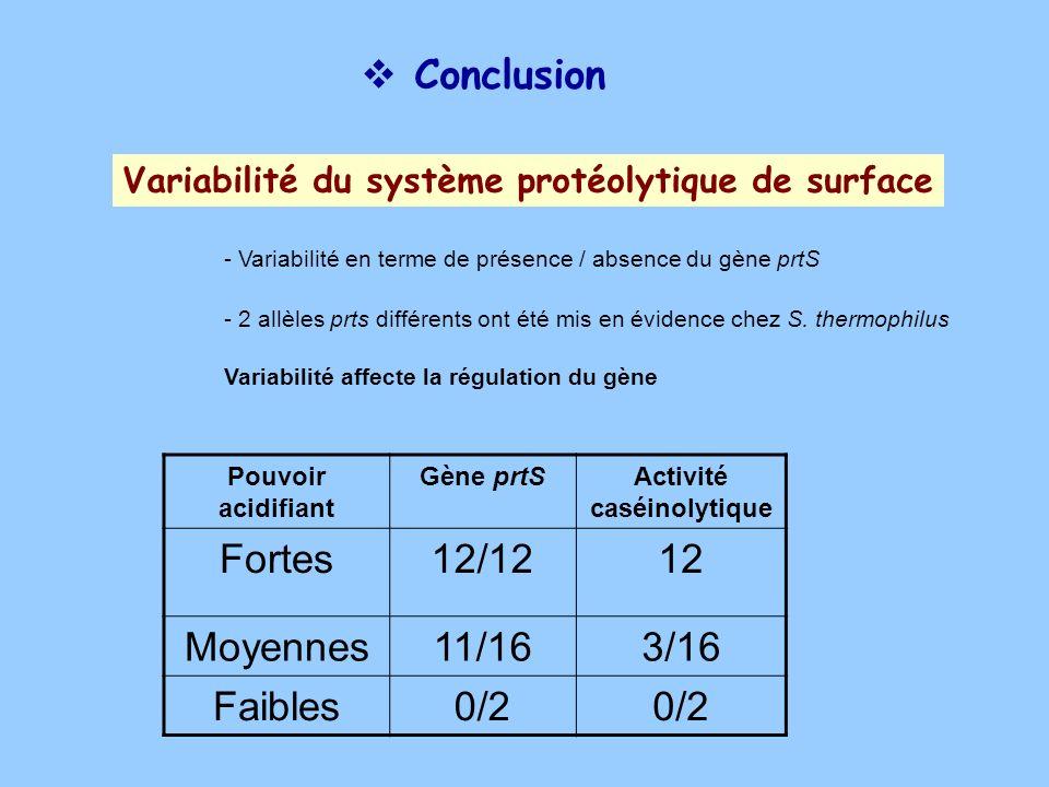 Conclusion Variabilité du système protéolytique de surface Pouvoir acidifiant Gène prtSActivité caséinolytique Fortes12/1212 Moyennes11/163/16 Faibles