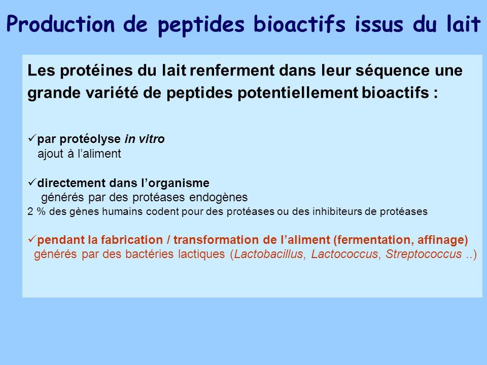 Production de peptides bioactifs issus du lait Les protéines du lait renferment dans leur séquence une grande variété de peptides potentiellement bioa