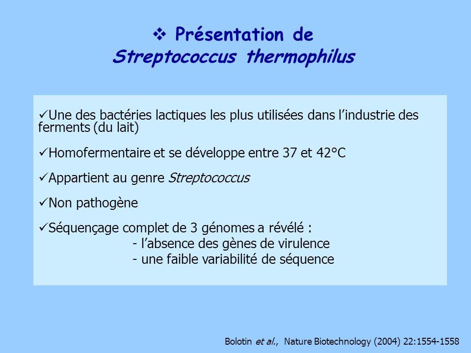 Présentation de Streptococcus thermophilus Une des bactéries lactiques les plus utilisées dans lindustrie des ferments (du lait) Homofermentaire et se