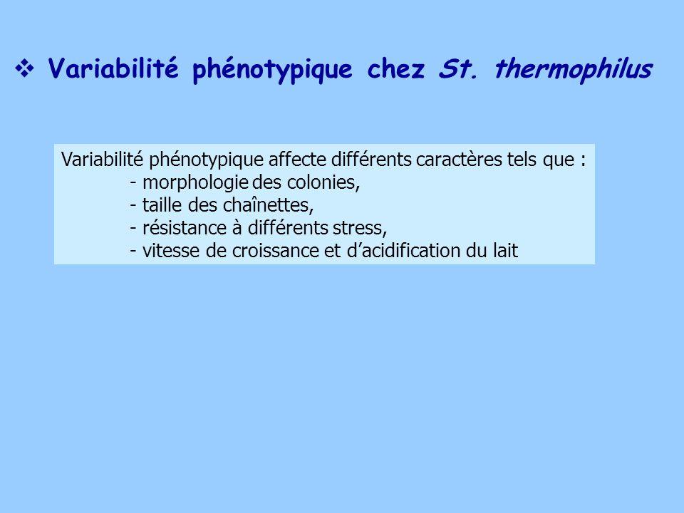 Variabilité phénotypique chez St. thermophilus Variabilité phénotypique affecte différents caractères tels que : - morphologie des colonies, - taille