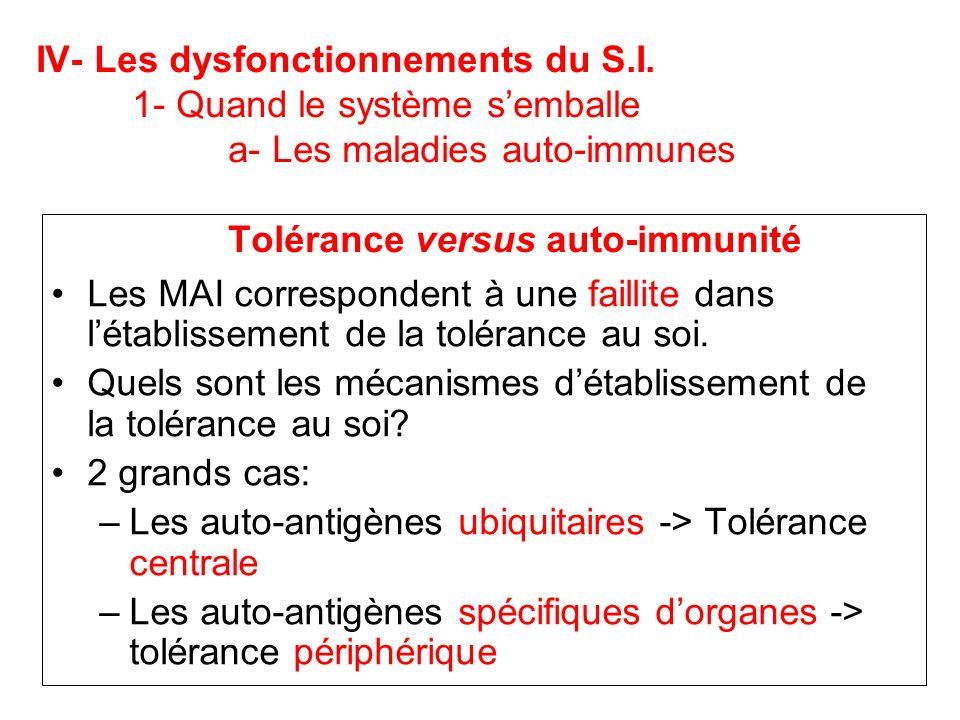 IV- Les dysfonctionnements du S.I. 1- Quand le système semballe a- Les maladies auto-immunes Tolérance versus auto-immunité Les MAI correspondent à un