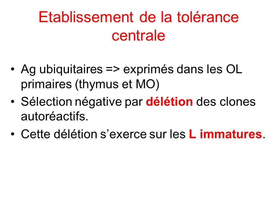 Etablissement de la tolérance centrale Ag ubiquitaires => exprimés dans les OL primaires (thymus et MO) Sélection négative par délétion des clones aut